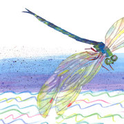Eric Carle Postcard - Dragonfly