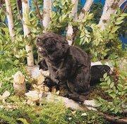 Beaver Puppet