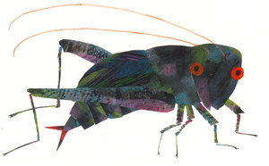 Eric Carle Postcard - Cricket