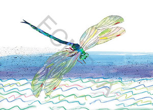 Dragonfly Limited Edition Print