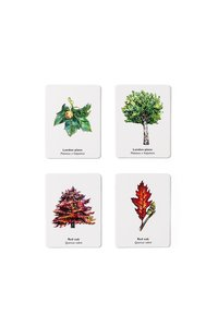 Match a Leaf Tree Memory Game