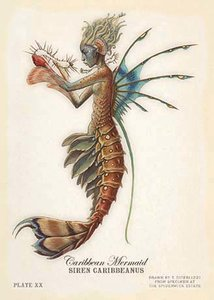 Tony DiTerizzi Postcard - Mermaid